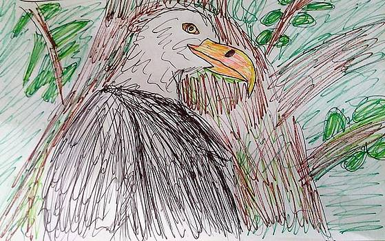 The Bald Eagle by Andrew Blitman