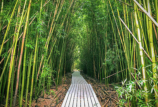 Bamboo Forest Path by Joy McAdams