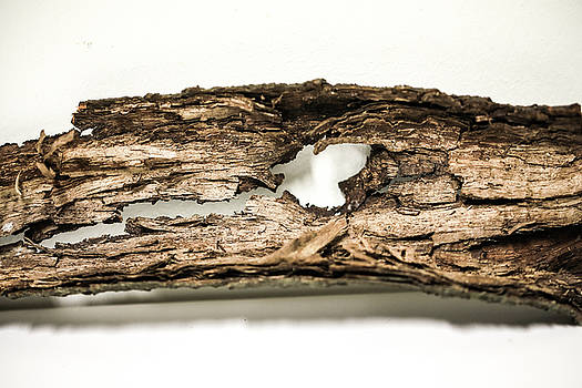 The Bark Of Tree Showed Human's Death. by Hyuntae Kim