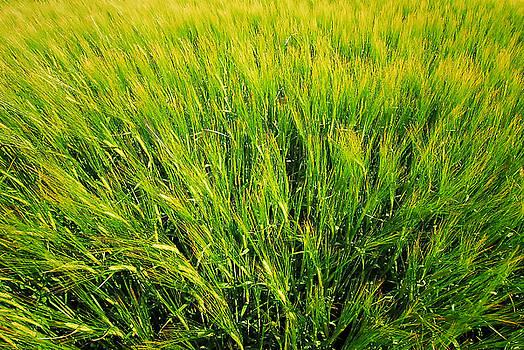 Paul W Sharpe Aka Wizard of Wonders - The Barley is Nearly Ready