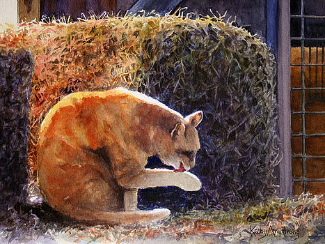 The Barn Cat by Kathy Armstrong
