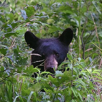 The Bear Cub by Pat Turner