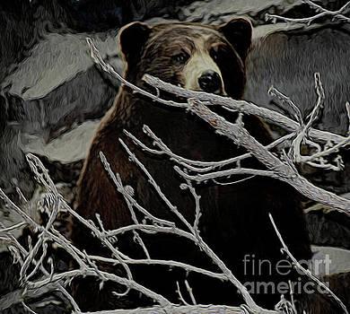 The Bear by Ray Shrewsberry