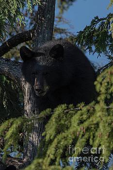 Rod Wiens - the Bear