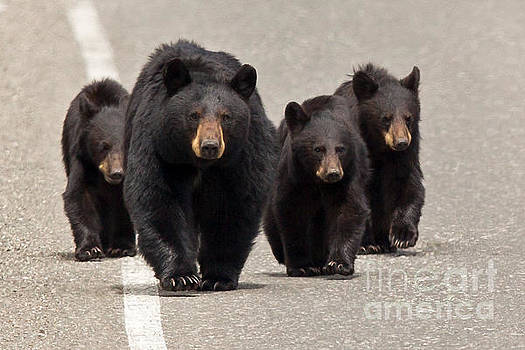 The Bears Are Coming by Natural Focal Point Photography