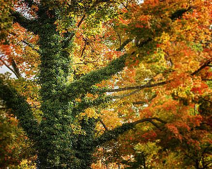 Lisa Russo - The Beautiful Tree