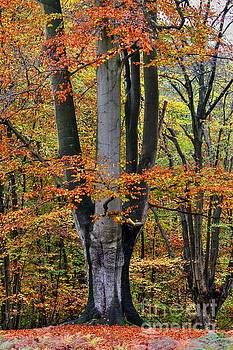 The Beauty of Fall by Vicki Spindler