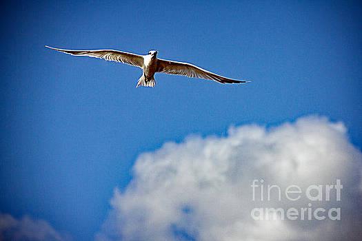 Bob Hislop - The Beauty of Flight