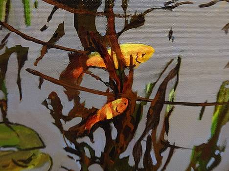 The Beauty of Goldfish by Catherine Robertson