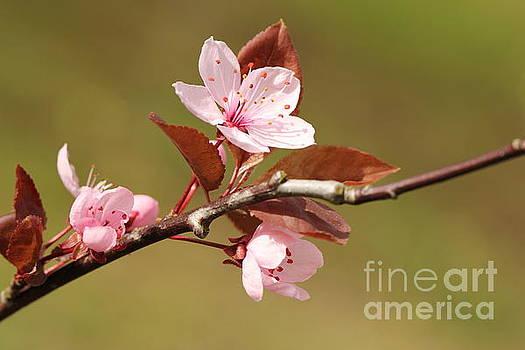 The beauty of springtime by Geraldine Jane Ramos-Bittenbinder