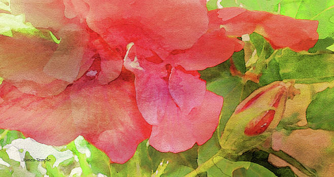 James Temple - The Beauty of Summer Digital Watercolor