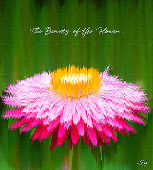 The Beauty of the Flower by Linda Ouellette