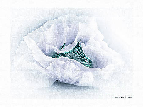 The Beauty Of White Poppy by Mona Stut