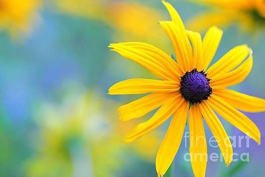 The beauty of yellow by Geraldine Jane Ramos-Bittenbinder