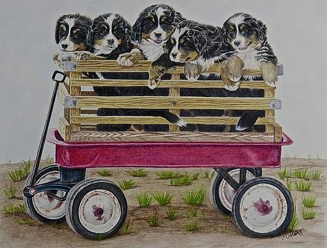 The Berner Bunch by Michelle McAdams