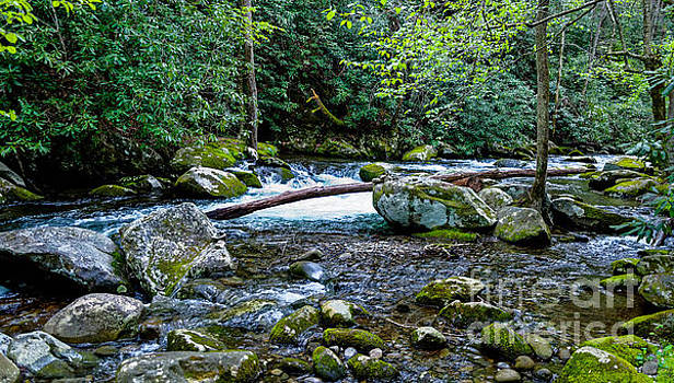 Paul Mashburn - The Big Rocks Of Thunderhead Prong