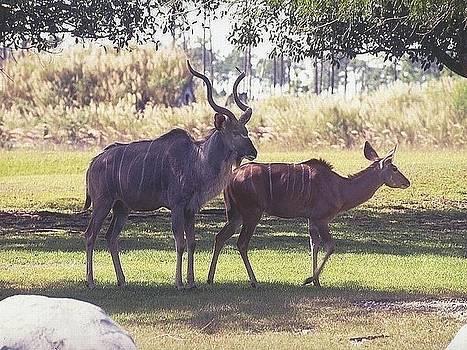 The Biggest Deer by Siddarth Rai
