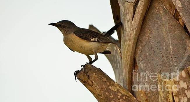 The Bird by Adelmo Leite de Sa
