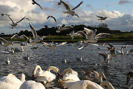 Martina Fagan - The Birds