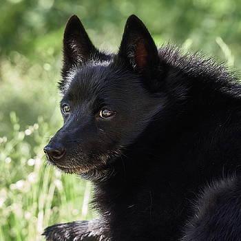 The Black Dog by Jouko Lehto