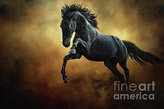 Dimitar Hristov - The Black Stallion in Dust