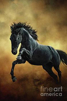 Dimitar Hristov - The Black Stallion in Dust II