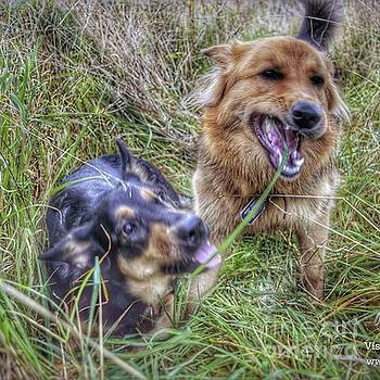 The Blade Of Grass Lol  #dogs by Isabella Shores
