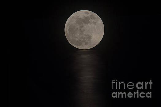 Bob Hislop - The Blood Moon Rising