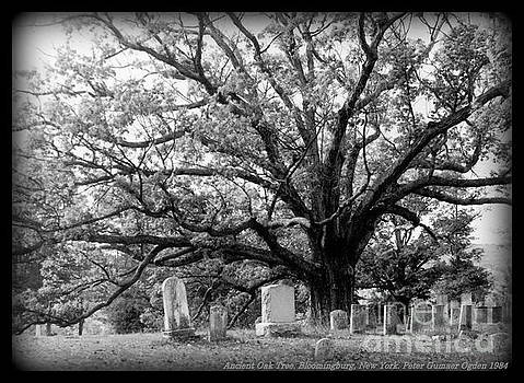 Peter Gumaer Ogden - The Bloomingburg Tree