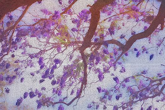 The Blossum by Chris Hood