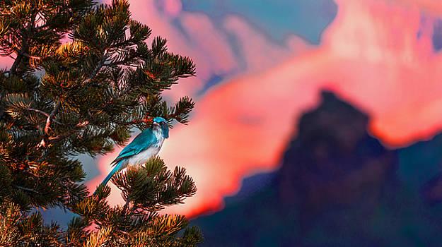 The Blue Bird by Sunman Studios