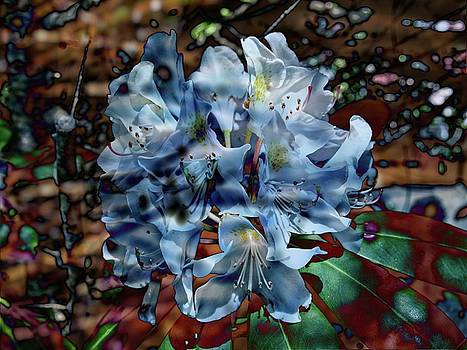 Thom Zehrfeld - The Blue Rhododendron