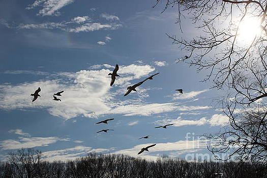 The Blue Skies of Winter by Dora Sofia Caputo Photographic Design and Fine Art