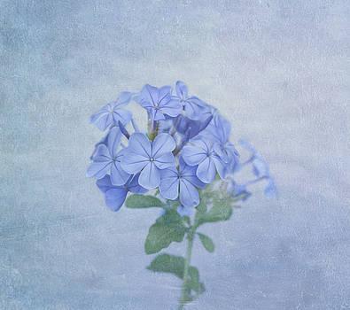 Kim Hojnacki - The Blues