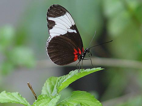 The Bold Butterfly by Reni Boisvert