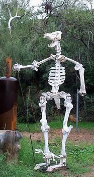 The Bone Yard by Patrick Trotter