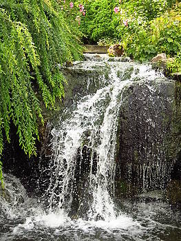 The Botanic Waterfall  by Lori Frisch
