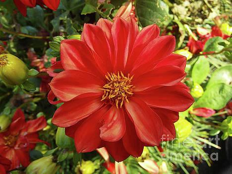 The Botanical Garden Zagreb Floral #2 by Jasna Dragun