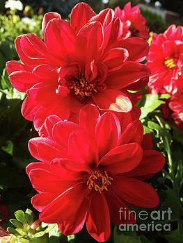 The Botanical Garden Zagreb Floral #3 by Jasna Dragun