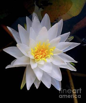 The Botanical Garden Zagreb - Water Lily #2 by Jasna Dragun