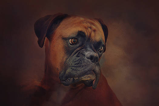 The Boxer by Sue Fulton