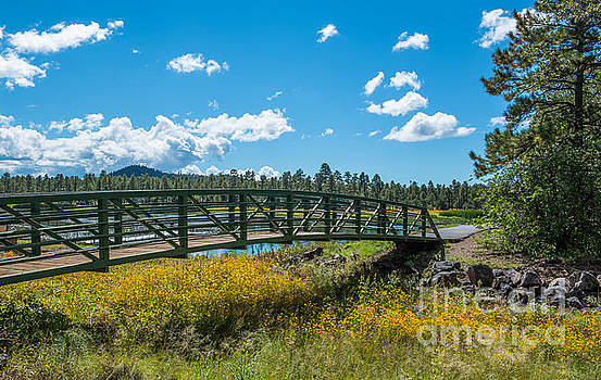 The Bridge at Woodland Lake in Pinetop, Arizona by Michael Moriarty