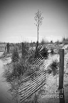 Jost Houk - The Broken Fence