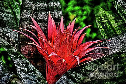 The Bromeliad Silver Vase Plant by Ray Shrewsberry