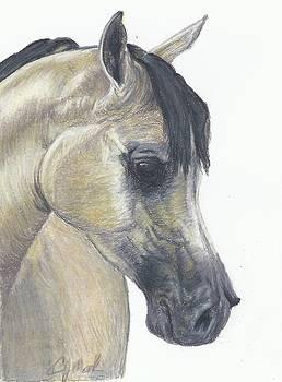 The Buckskin by Caren Moak-khan