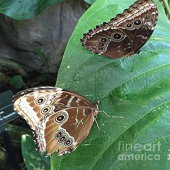 The Butterfly Couple by Barbara Plattenburg