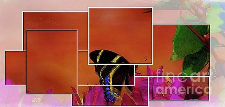 The Butterfly by John Kolenberg