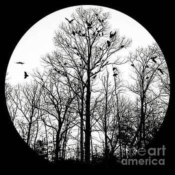 The Buzzard Tree by Waverley Manson