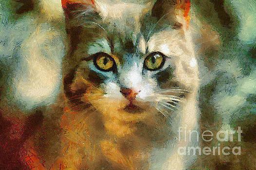 Dimitar Hristov - The Cat Eyes