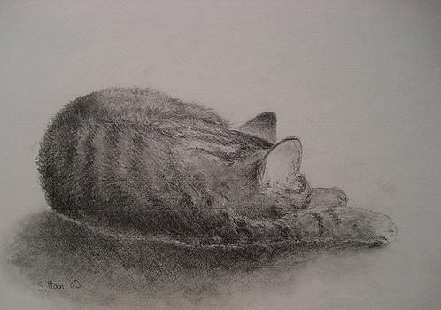 The Cat Series II by Sabina Haas